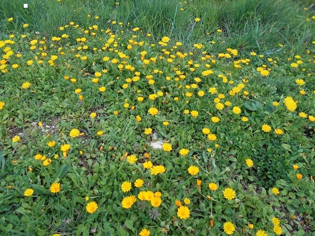 緑の草の中に春の色_d0153860_11160323.jpg