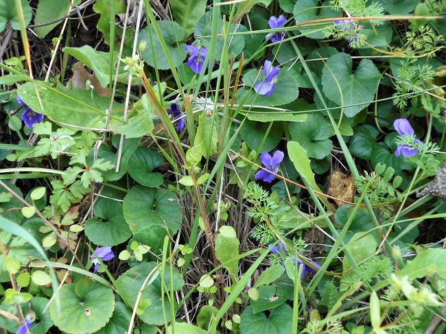 緑の草の中に春の色_d0153860_11163393.jpg