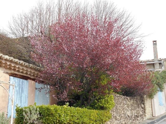 緑の草の中に春の色_d0153860_11175293.jpg