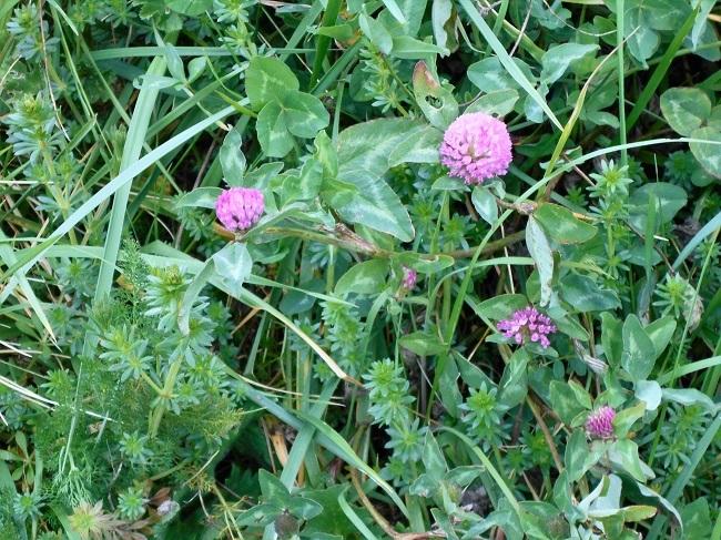 緑の草の中に春の色_d0153860_11190467.jpg