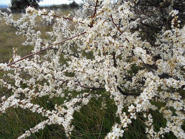 緑の草の中に春の色_d0153860_11195484.jpg