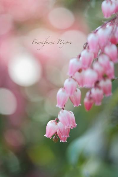 ピンクのアセビ **_d0344864_17332077.jpg