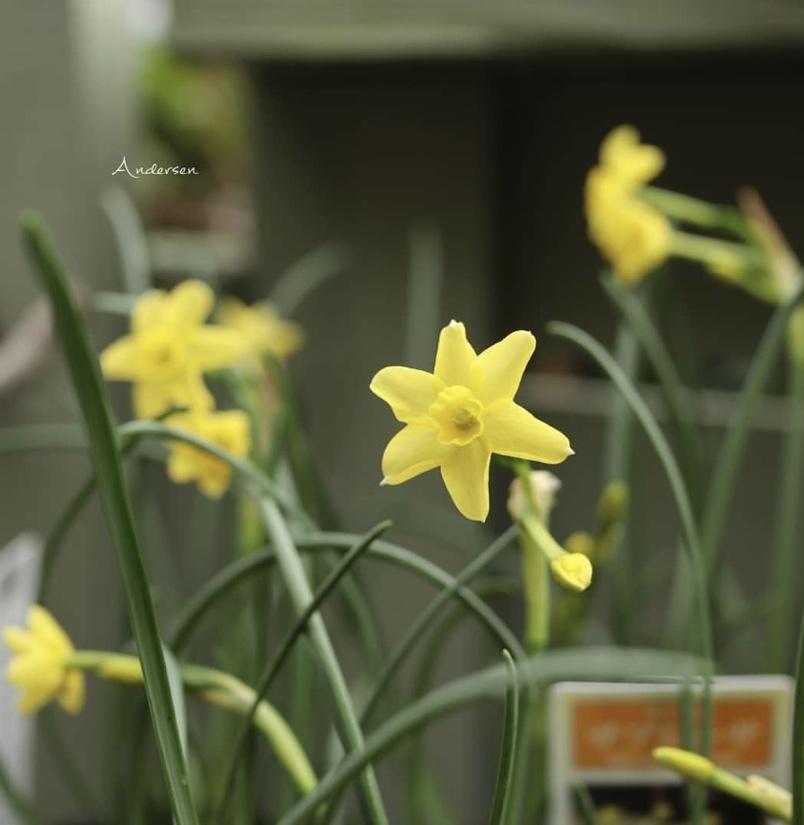 季節はもう春_b0137969_06524041.jpeg