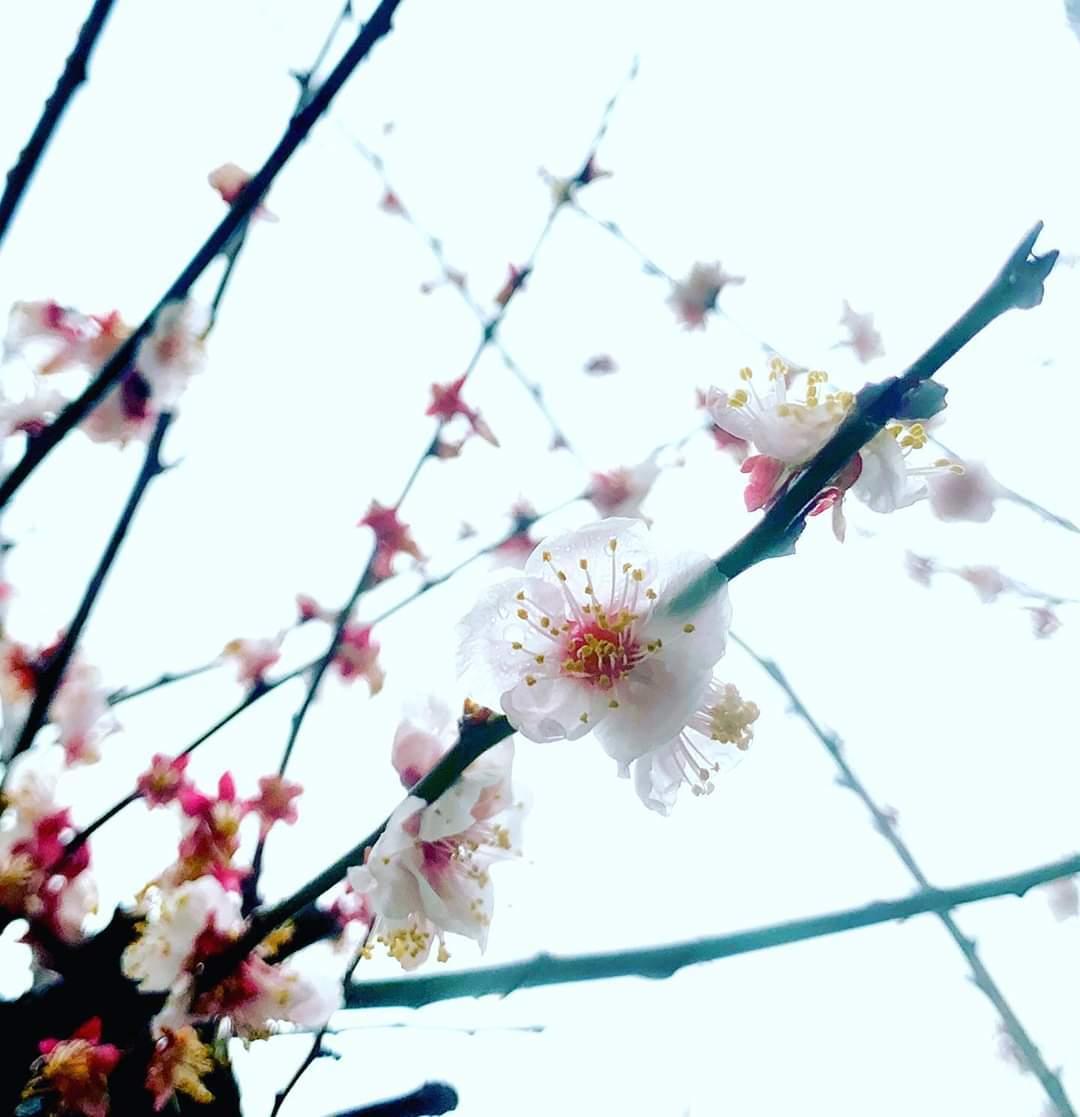 3月子育て支援の教室 お休みのおしらせ_c0366378_13062003.jpg