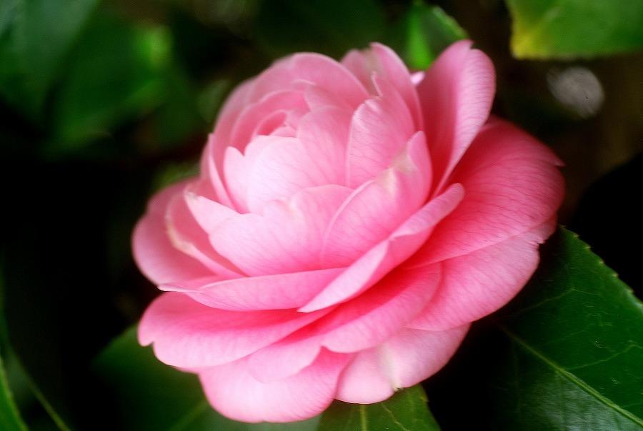 狭庭の春_c0187781_13421616.jpg