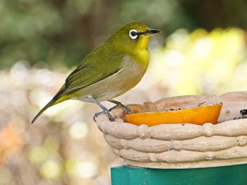 富浜緑地で見られる野鳥_d0338682_14005824.jpg