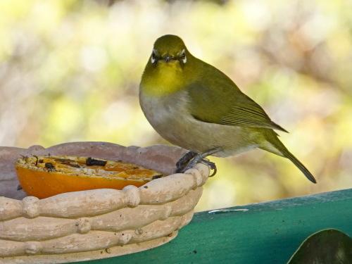 富浜緑地で見られる野鳥_d0338682_14011631.jpg