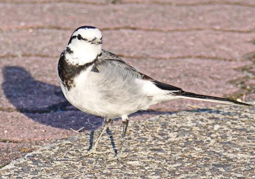 富浜緑地で見られる野鳥_d0338682_14020756.jpg
