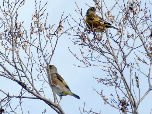 富浜緑地で見られる野鳥_d0338682_14024493.jpg