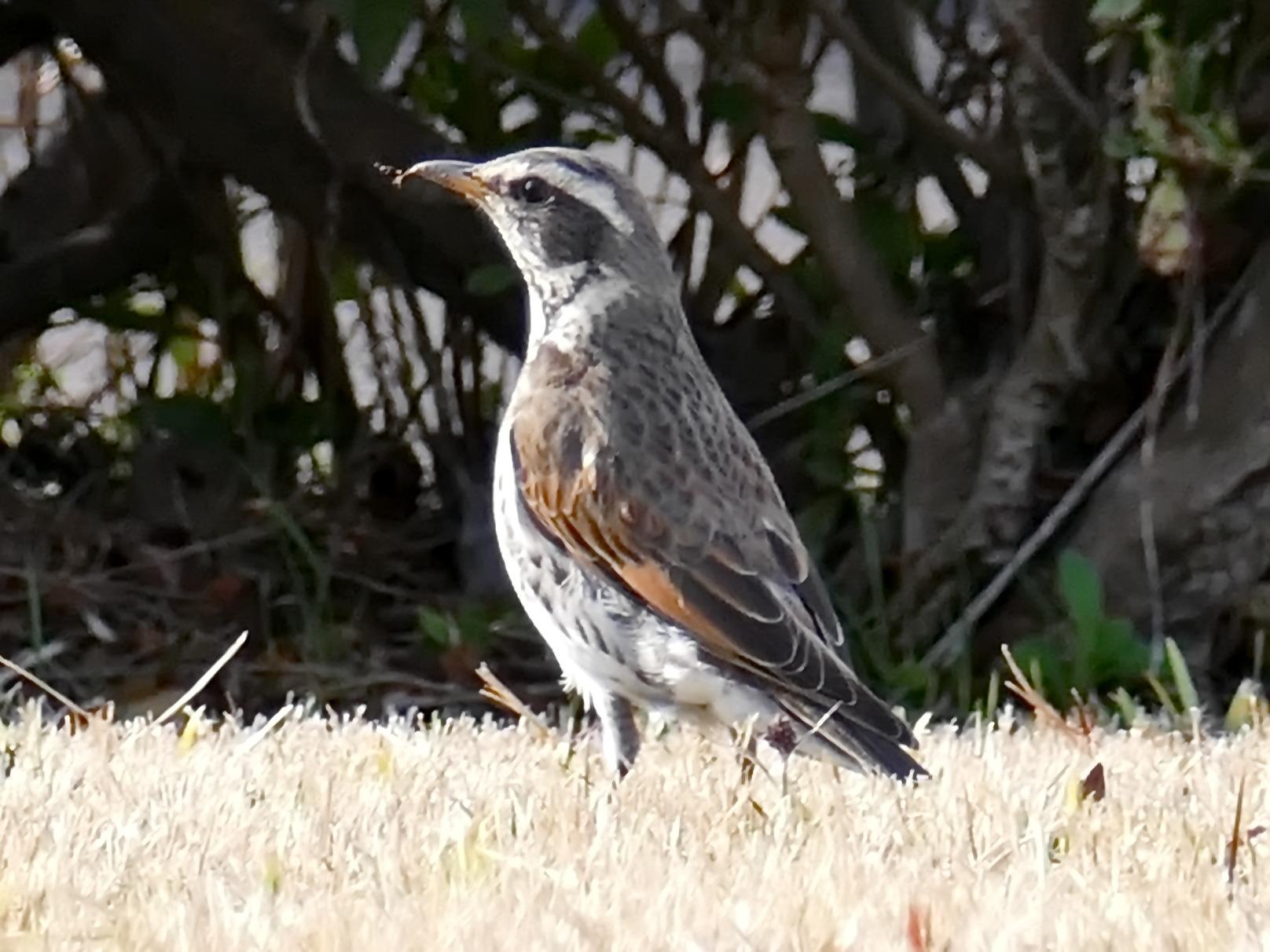 富浜緑地で見られる野鳥_d0338682_14031651.jpg