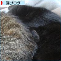 変形猫団子_a0389088_07423192.jpg