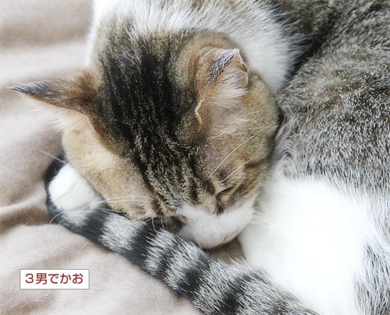 変形猫団子_a0389088_07423211.jpg