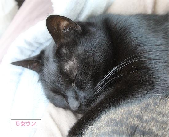 変形猫団子_a0389088_07423293.jpg