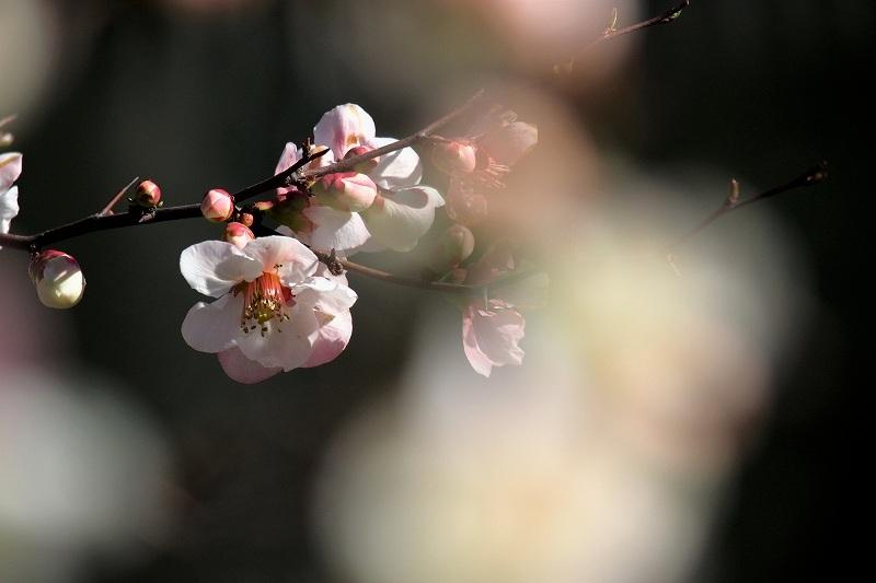 向島百花園のお花たち_e0348392_20180484.jpg