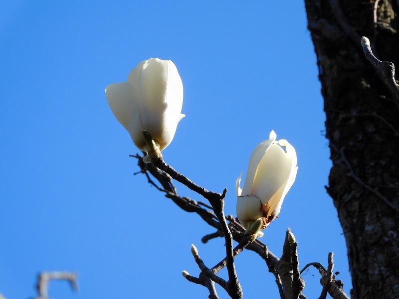 春の花が咲きました_b0049307_12145467.jpg
