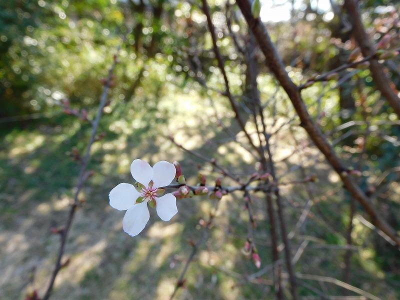 春の花が咲きました_b0049307_12145484.jpg