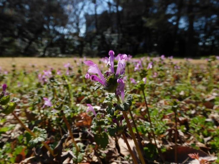 春の花が咲きました_b0049307_13384219.jpg