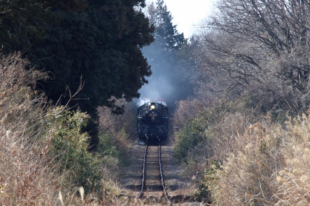 冬の陽差しに揺れる汽車 - 2019年・真岡鉄道 -_b0190710_22113035.jpg