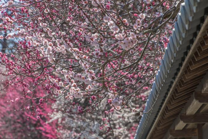 春が来たか?!_b0010915_21010911.jpg