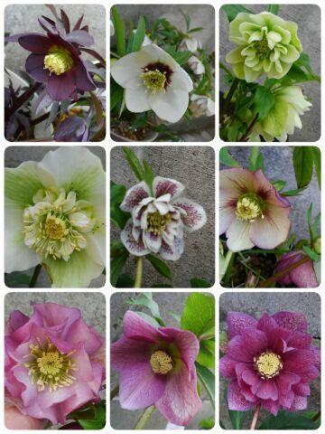 3月の庭_d0162516_23465079.jpg
