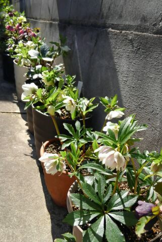 3月の庭_d0162516_23471339.jpg
