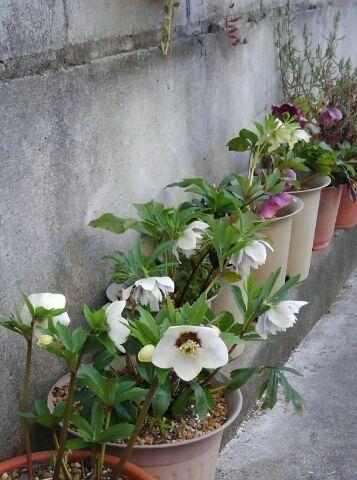 3月の庭_d0162516_23472782.jpg
