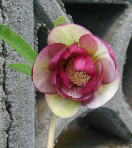 3月の庭_d0162516_23474212.jpg