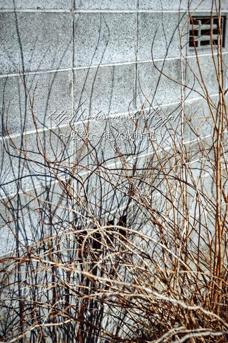 蠢く冬の残り香。_f0235723_18032893.jpg