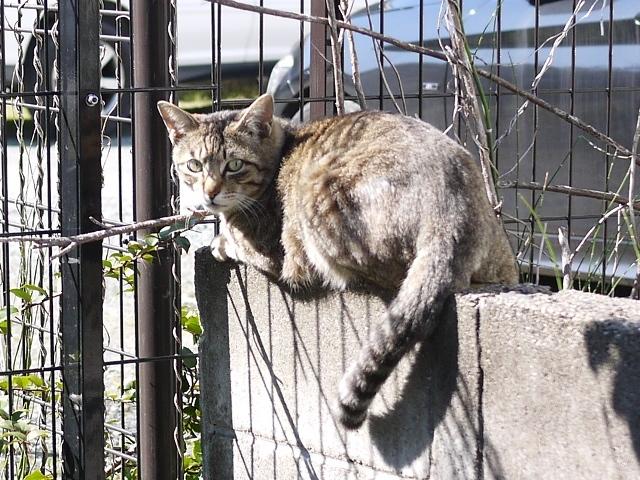 猫のお留守番 霧くん編。_a0143140_19531142.jpg