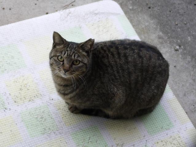 猫のお留守番 霞ちゃん編。_a0143140_19570102.jpg