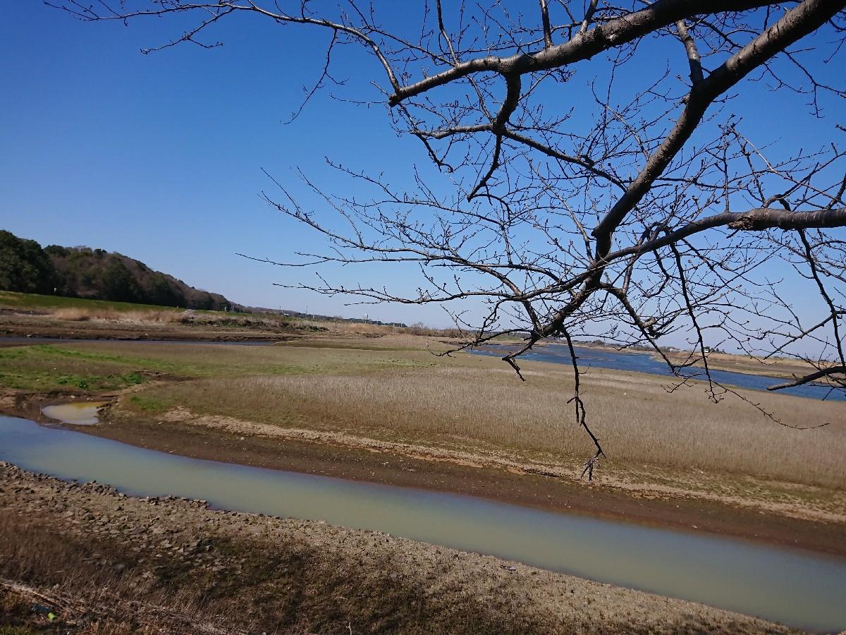 サイクリングへ(小貝川)_f0323446_21232318.jpg