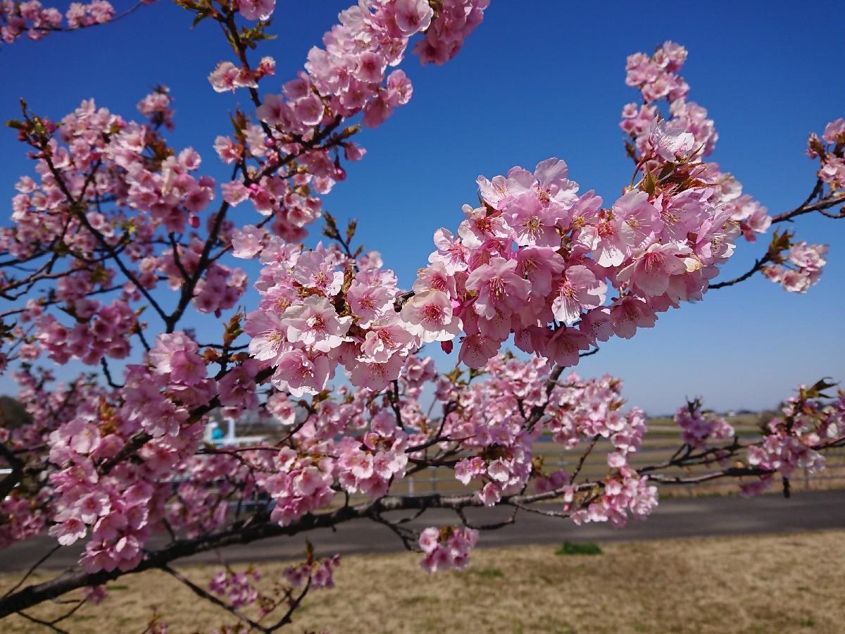 サイクリングへ(小貝川)_f0323446_21303554.jpg