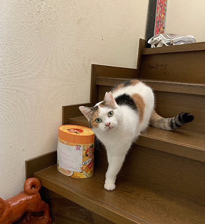 階段のミケ子_a0028451_12550644.jpg