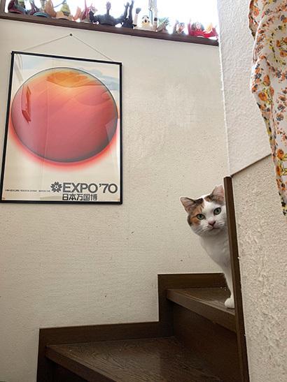 階段のミケ子_a0028451_12550662.jpg