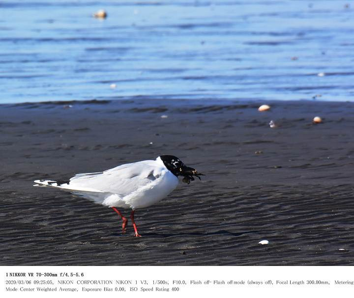 ふなばし三番瀬海浜公園 2020.3.6_c0062451_22035679.jpg