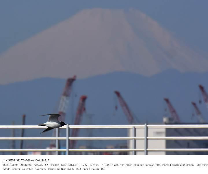 ふなばし三番瀬海浜公園 2020.3.6_c0062451_22065860.jpg