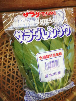 水耕栽培の新鮮野菜 無農薬栽培の生野菜!新商品!「グリーンクリスピー」の販売に向けて!_a0254656_17134600.jpg