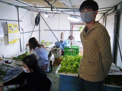 水耕栽培の新鮮野菜 無農薬栽培の生野菜!新商品!「グリーンクリスピー」の販売に向けて!_a0254656_17265619.jpg