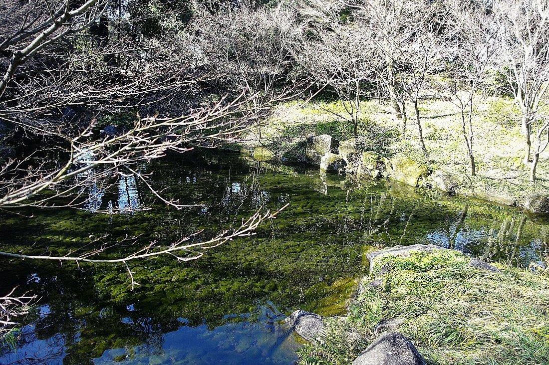 徳川園  龍門の瀧と大曽根の瀧_c0112559_08141409.jpg