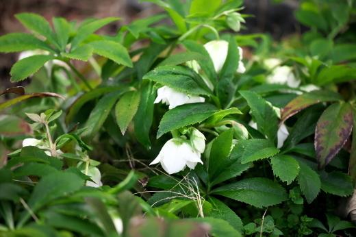 春の庭_c0179360_13205184.jpg