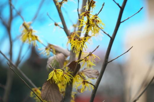 春の庭_c0179360_13210112.jpg