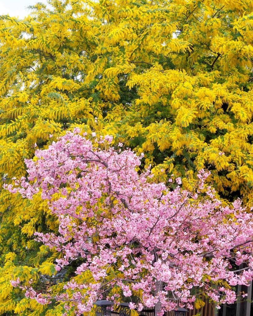 アンズの花をタップリと ほか_c0305565_17481420.jpg