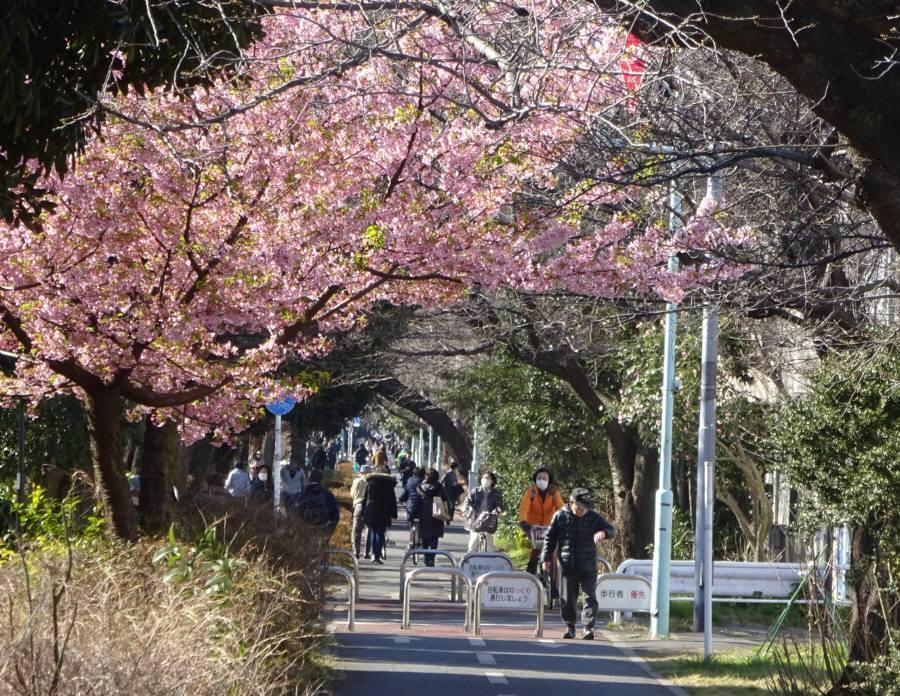 早春の狭山境緑道_f0059673_18501409.jpg