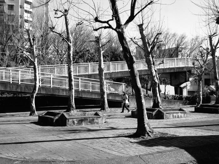 多摩市の冬のプラタナス_c0182775_1610425.jpg
