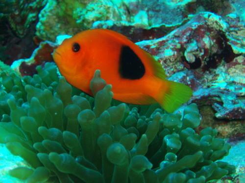アンダマン海のだけの固有種(*^_^*)_f0144385_12201511.jpg