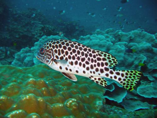 アンダマン海のだけの固有種(*^_^*)_f0144385_12201559.jpg