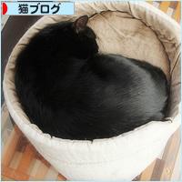 猫カフェ、プレオープン_a0389088_05070999.jpg