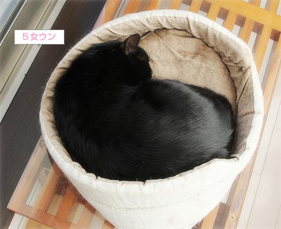 猫カフェ、プレオープン_a0389088_05071031.jpg