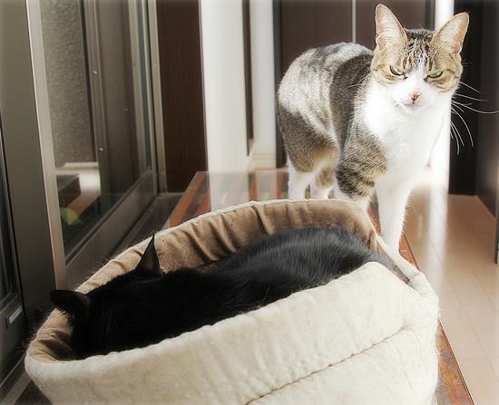 猫カフェ、プレオープン_a0389088_05071070.jpg