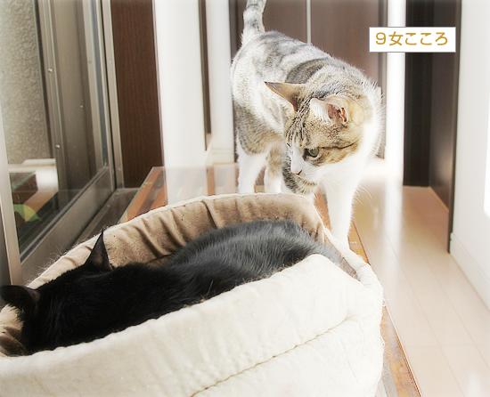 猫カフェ、プレオープン_a0389088_05071073.jpg